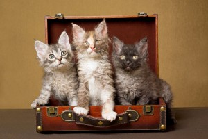 kittens-in-suitcase