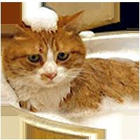 Pet Grooming Sidebar